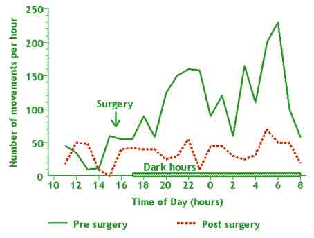 change in activity of rats after laparotomy with visceral
